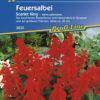 Vrtnarstvo Breskvar - Salvia splendens Scarlet King