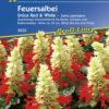Vrtnarstvo Breskvar - Salvia splendens Unica Red & White