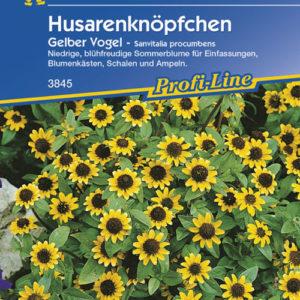 Vrtnarstvo Breskvar - Sanvitalia procumbens Gelber Vogel