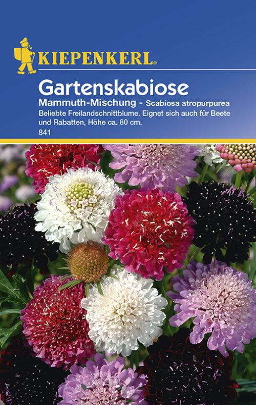 Vrtnarstvo Breskvar - Scabiosa antropurpurea Mammuth Mix