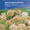 Vrtnarstvo Breskvar - Scabiosa stellata Pingpong