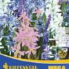 Vrtnarstvo Breskvar - Scilla Blausternchen Mix Mega Pack