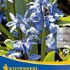 Vrtnarstvo Breskvar - Scilla siberica