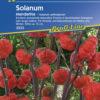 Vrtnarstvo Breskvar - Solanum aethiopicum Mandarina