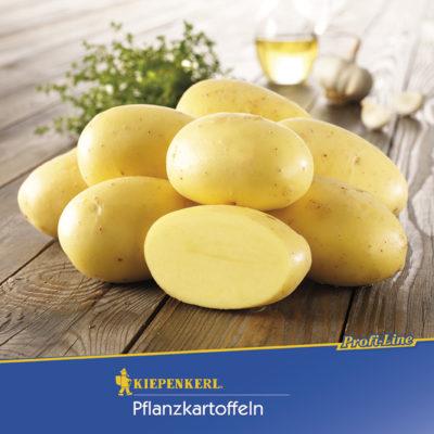 Vrtnarstvo Breskvar - Solanum tuberosum Agria Bio