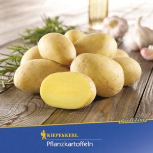 Solanum tuberosum Alexandra