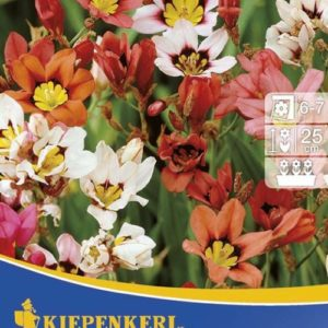 Vrtnarstvo Breskvar - Sparaxis Mix
