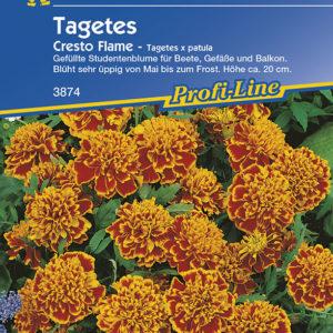 Vrtnarstvo Breskvar - Tagetes patula Çresto Flame