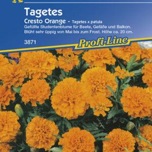 Vrtnarstvo Breskvar - Tagetes patula Çresto Orange