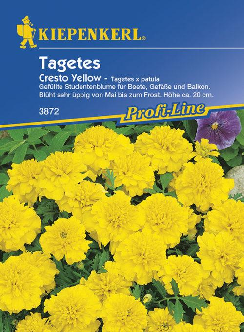 Vrtnarstvo Breskvar - Tagetes patula Çresto Yellow