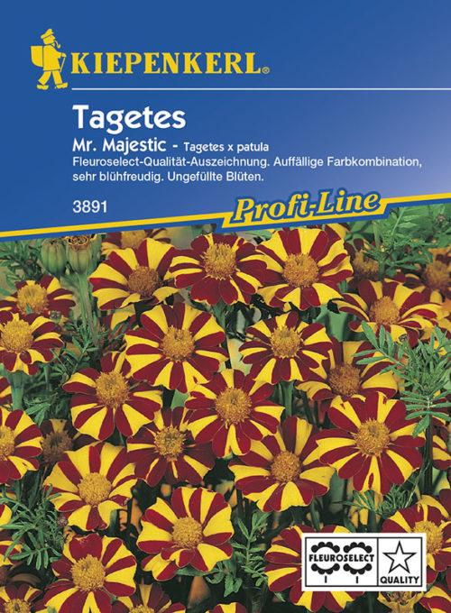 Vrtnarstvo Breskvar - Tagetes patula Mr Majestic