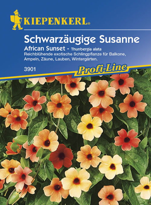 Vrtnarstvo Breskvar - Thunbergia alata African Sunset