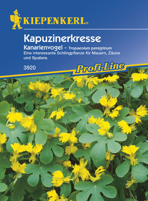 Vrtnarstvo Breskvar - Tropaeolum peregrinum Kanarienvogel