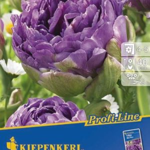 Vrtnarstvo Breskvar - Tulipa Blue Wow