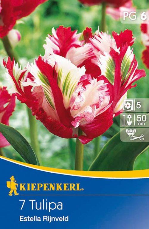 Vrtnarstvo Breskvar - Tulpa Estella Rijnveld