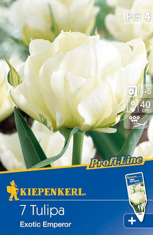 Vrtnarstvo Breskvar - Tulipa Exotic Emperor