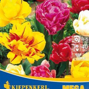 Vrtnarstvo Breskvar - Tulipa Gefüllte Mix Mega Pack