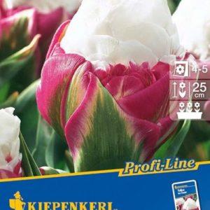 Vrtnarstvo Breskvar - Tulipa Ice Cream