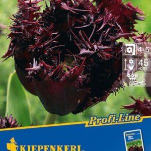 Vrtnarstvo Breskvar - Tulipa Labrador