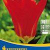 Vrtnarstvo Breskvar - Tulipa Madame Lefeber