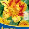 Vrtnarstvo Breskvar - Tulipa Monsella