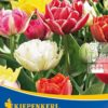 Vrtnarstvo Breskvar - Tulipa Murillo Mix