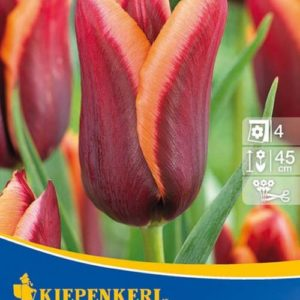 Vrtnarstvo Breskvar - Tulipa Muvota