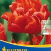 Vrtnarstvo Breskvar - Tulipa Orange Nassau