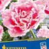 Vrtnarstvo Breskvar - Tulipa Queensland