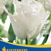 Vrtnarstvo Breskvar - Tulipa Swan Mix