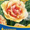 Vrtnarstvo Breskvar - Tulipa Vaya con Dios