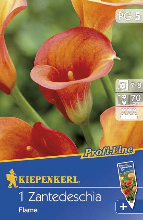 Vrtnarstvo Breskvar - Zantedeschia Flame