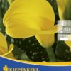 Vrtnarstvo Breskvar - Zantedeschia Gelb
