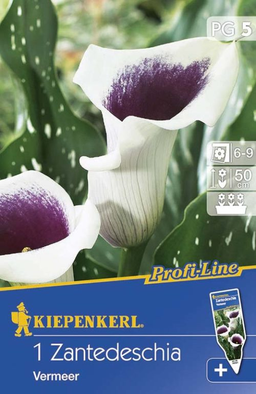 Vrtnarstvo Breskvar - Zantedeschia Vermeer