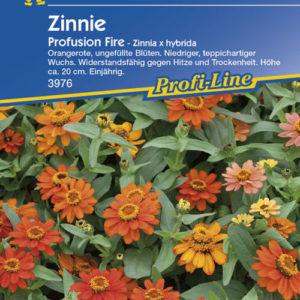 Vrtnarstvo Breskvar - Zinnia hybrida Profusion Fire