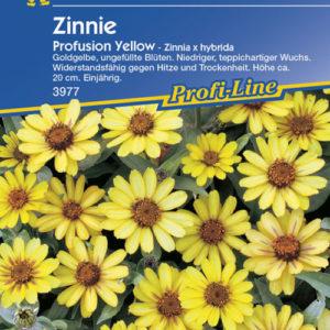 Vrtnarstvo Breskvar - Zinnia hybrida Profusion Yellow
