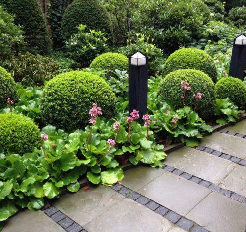 Vrtnarstvo Breskvar - Buxus sempervirens Suffruticosa