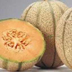 Vrtnarstvo Breskvar - Cucumis melon Gordes F1