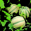 Vrtnarstvo Breskvar - Cucumis Melon Janet F1