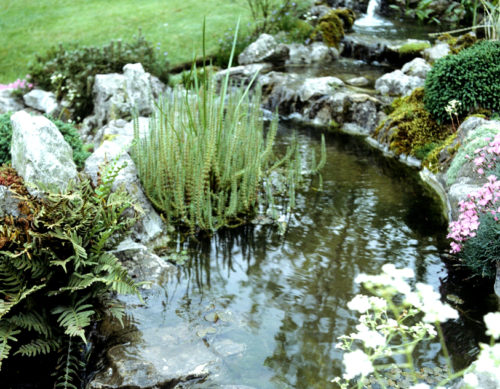 Vrtnarstvo Breskvar - Hippuris vulgaris