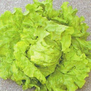 Vrtnarstvo Breskvar - Lactuca sativa Eole