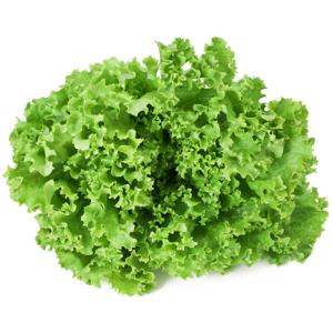 Vrtnarstvo Breskvar - Lactuca sativa Exquise