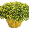 Vrtnarstvo Breskvar - Mecardonia Gold Dust