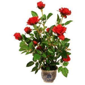Vrtnarstvo Breskvar - Roses
