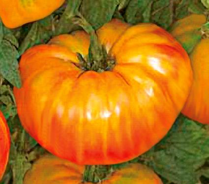 Vrtnarstvo Breskvar - Solanum lycopersicum Ananas