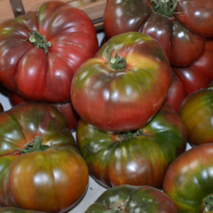 Vrtnarstvo Breskvar - Solanum lycopersicum Black Krim