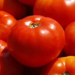 Vrtnarstvo Breskvar - Solanum lycopersicum Bobcat F1