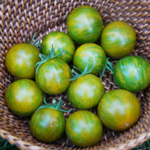 Vrtnarstvo Breskvar - Solanum lycopersicum Green Zebra