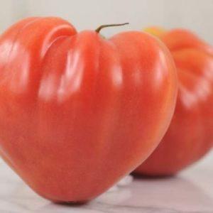 Vrtnarstvo Breskvar - Solanum lycopersicum Oxen Heart