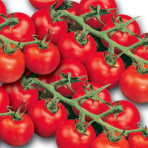 Vrtnarstvo Breskvar - Solanum lycopersicum Paki F1